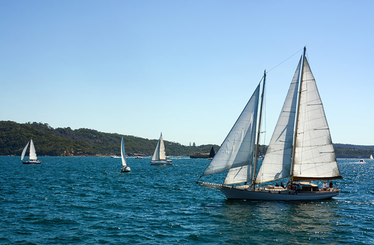 Sailboats on Sydney Harbour during a clear autumn day.