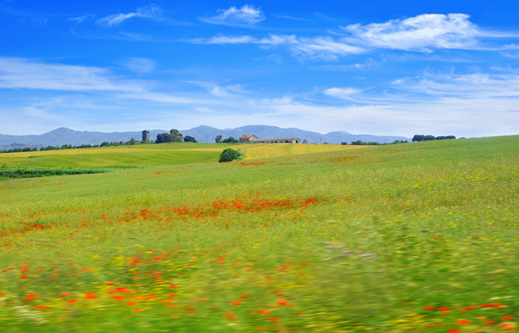 Beautiful Italian farmland and red poppies seen from a bus window.